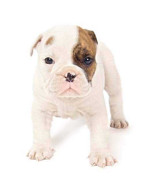 English Dog Names Male And Female