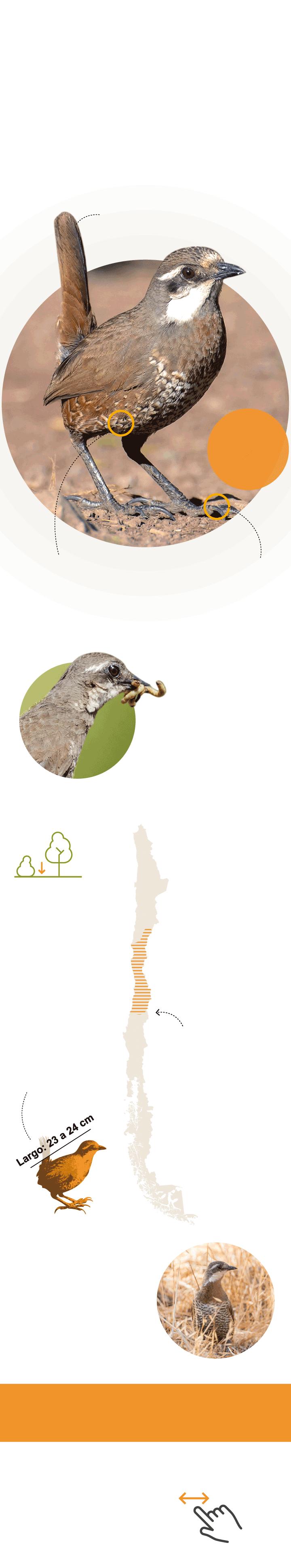 A Vuelo De Pajaro Con Imagenes Aves De Chile