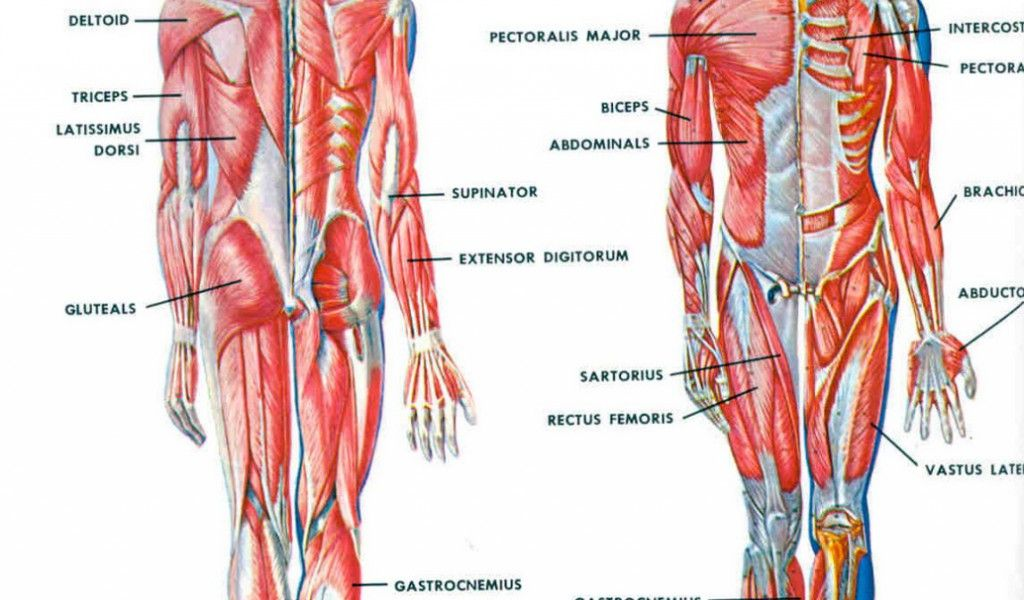 What Is The Importance Of Human Anatomy And Physiology Anatomy