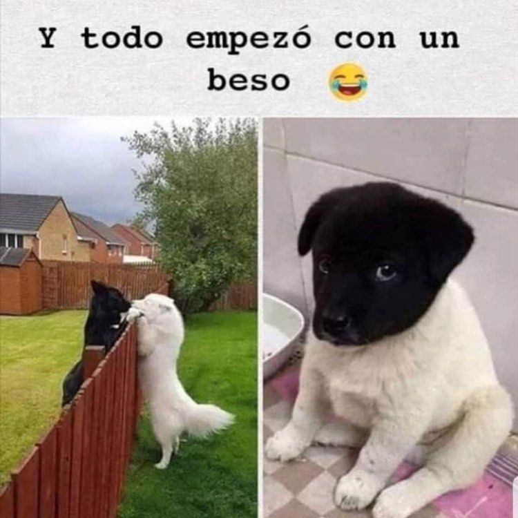 Y Solo Por Un Beso Dogloverchile Doglover Doglovers Amomiperro Perroschilenos Funny Dog Memes Cute Animals Cute Animal Memes