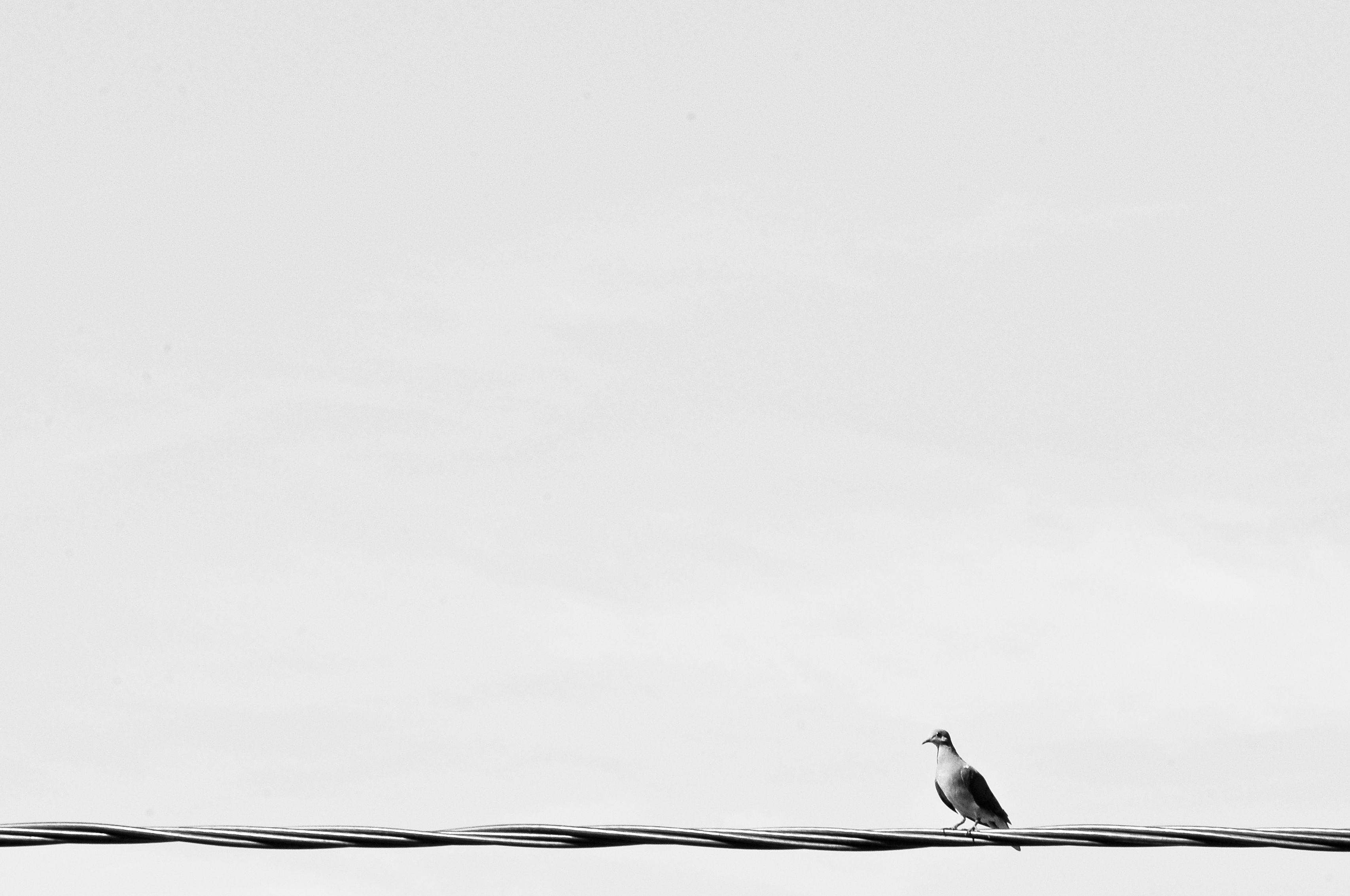 fotógrafo : Henrique Fernandes