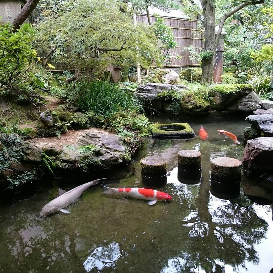 f322012b7f25e8ac270b3928cfea23f3 - The Koi Whisperer Sanctuary & Japanese Gardens