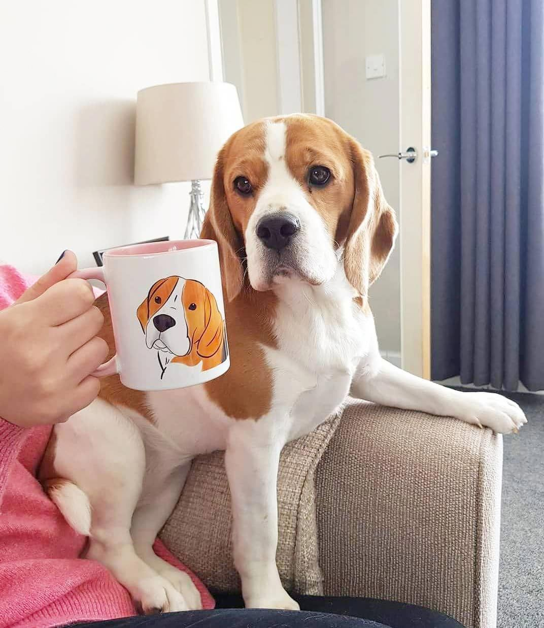 Fantastic Beagles Info Is Available On Our Internet Site Take A