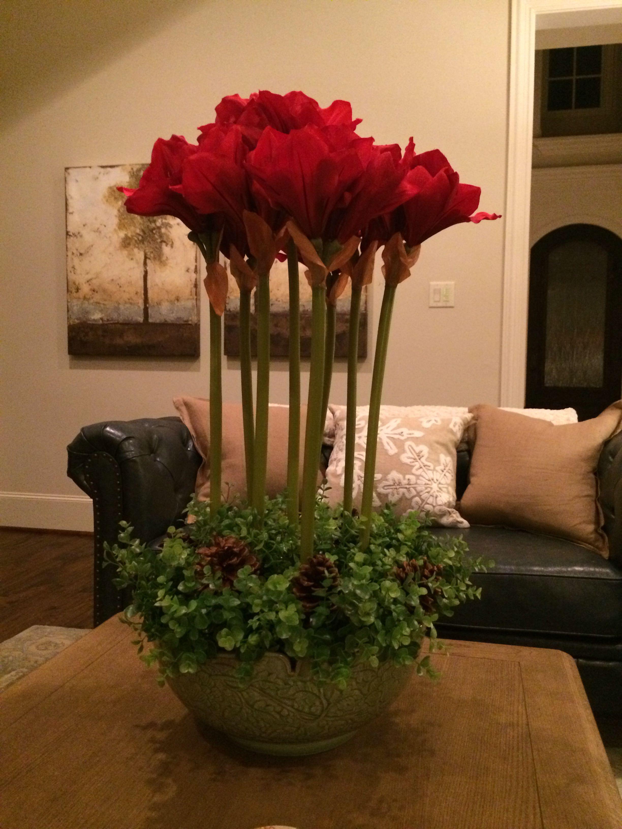 Amaryllis arrangement #amaryllisdeko