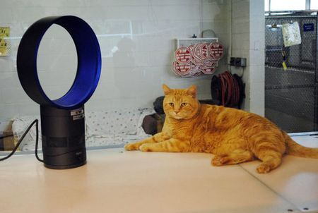 Dyson Fans Can Keep Your Pets Cool But They Are Also Bladeless Making Safer For Pets At Home This One Is 299 99 Dyson Fan Dyson Heater Fan