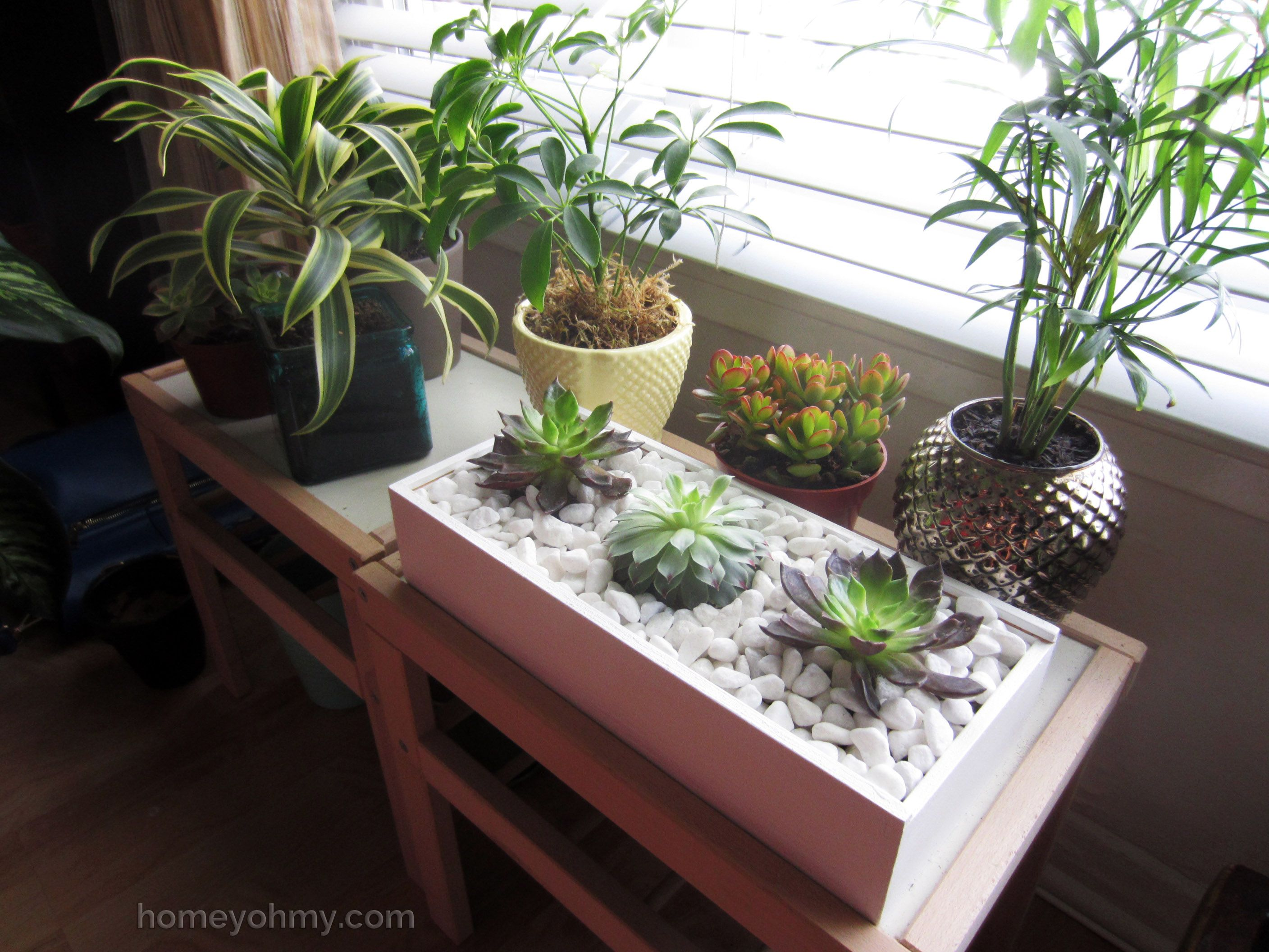 DIY Succulent Box | Pinterest