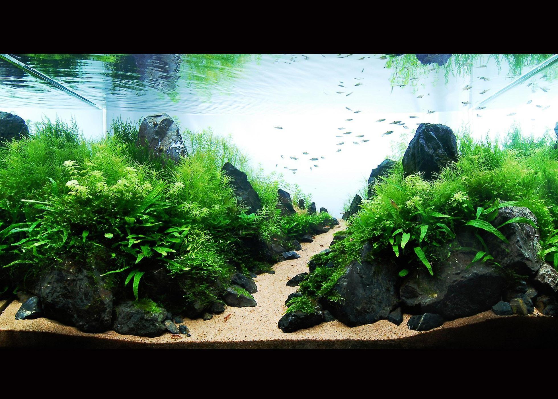 Black Natural Stone Aquascape Landscape Ideas With Sand Plus Green