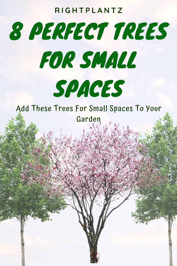8 Perfect Trees For Small Spaces I Rightplantz Com Small Landscape Trees Backyard Trees Landscaping Small Ornamental Trees