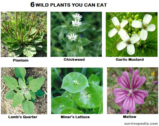 Imagini pentru wild edibles