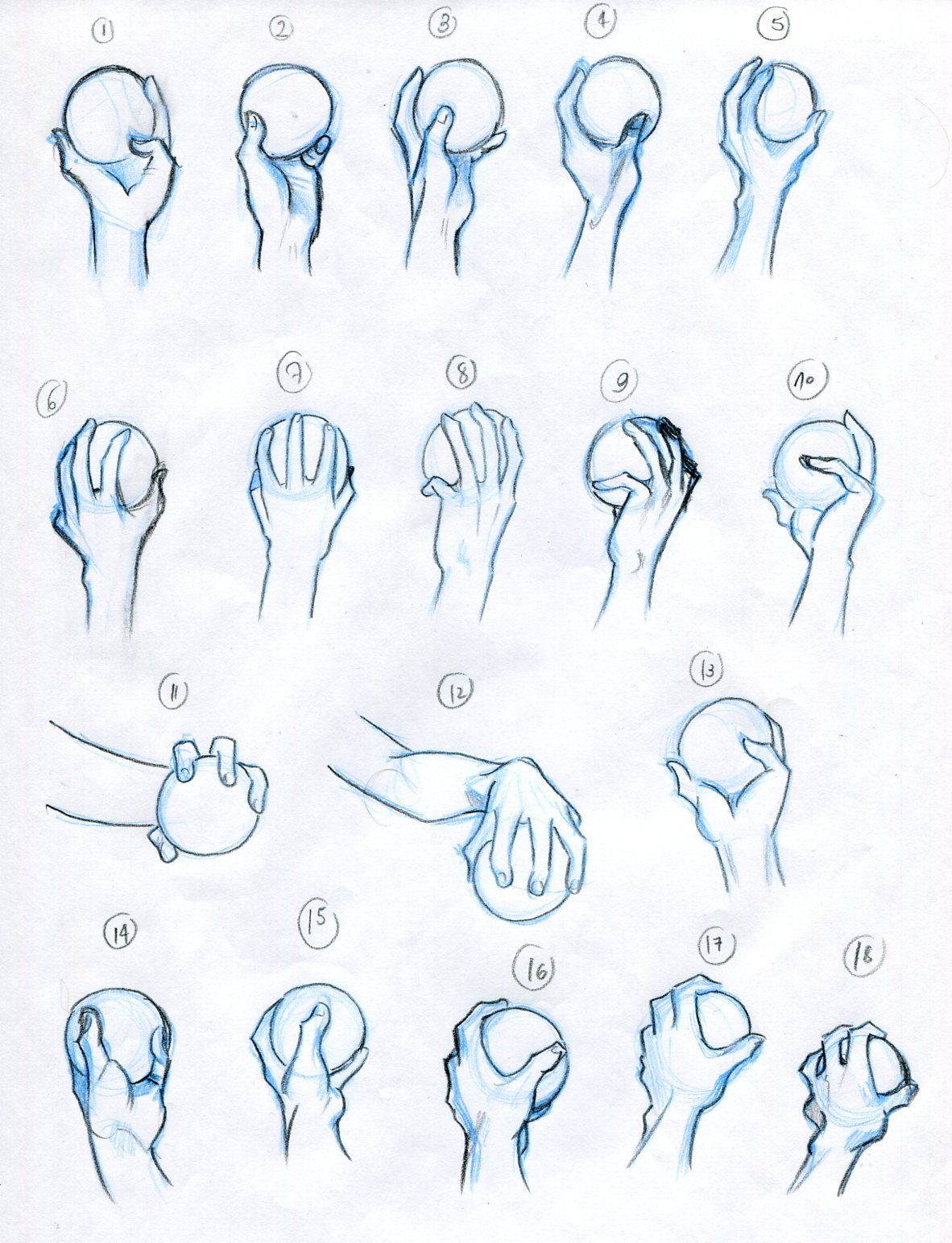 Anatomy - hands holding objects - the ball | Anatomy exercises ...