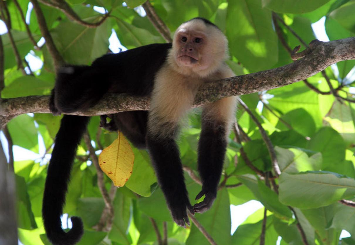 Monos Araña Wallpapers - Buscar Con Google