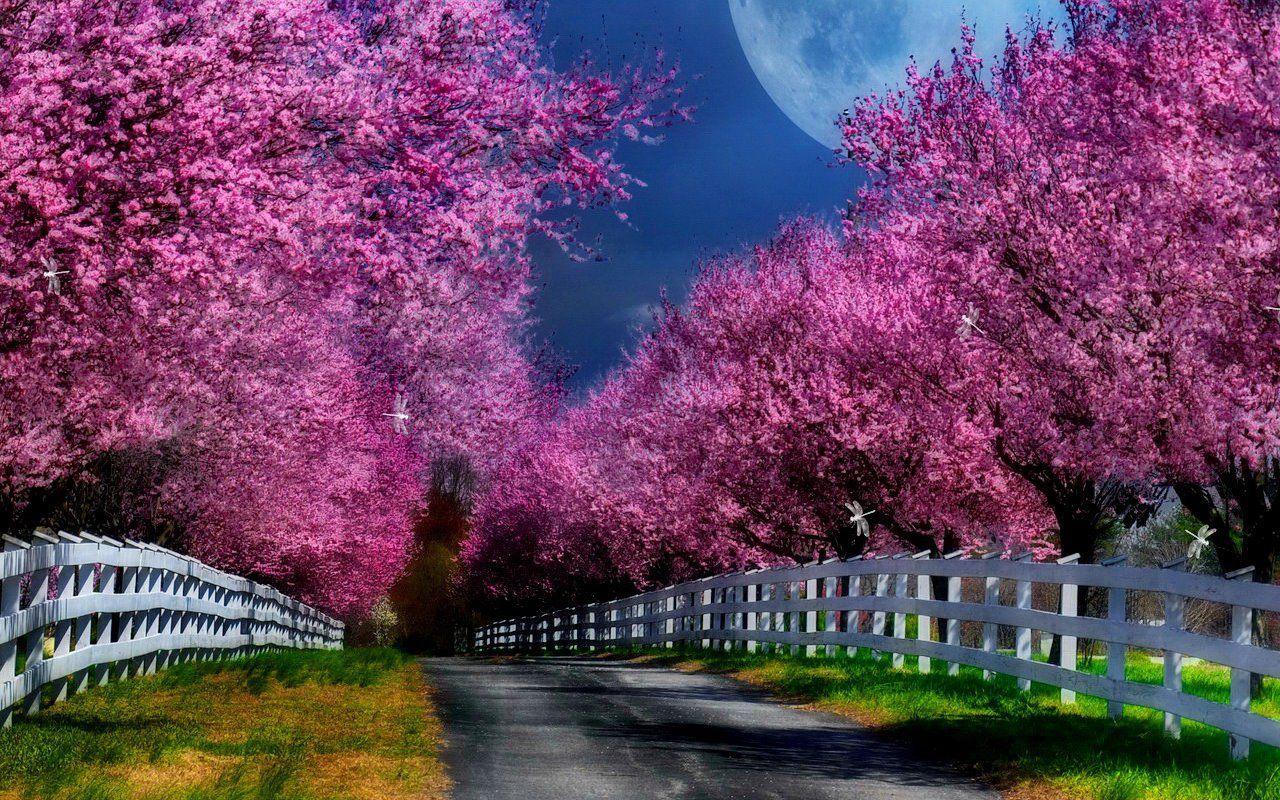 Stunning Beautiful Nature Scenes Beautiful Nature Nature Scenes