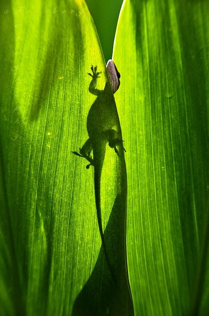 Greeeeen Earth Song Color Of Life Animals Beautiful