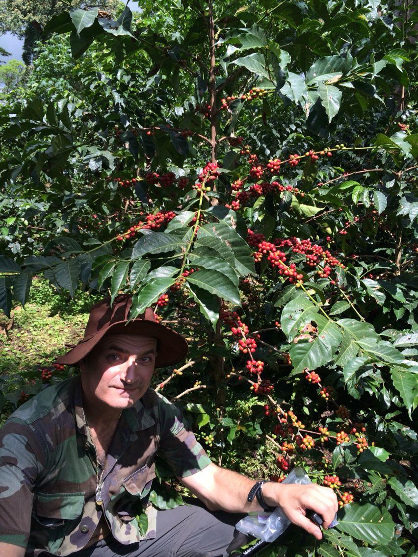 Under a coffee fruit tree Coffee farm, Speciality coffee