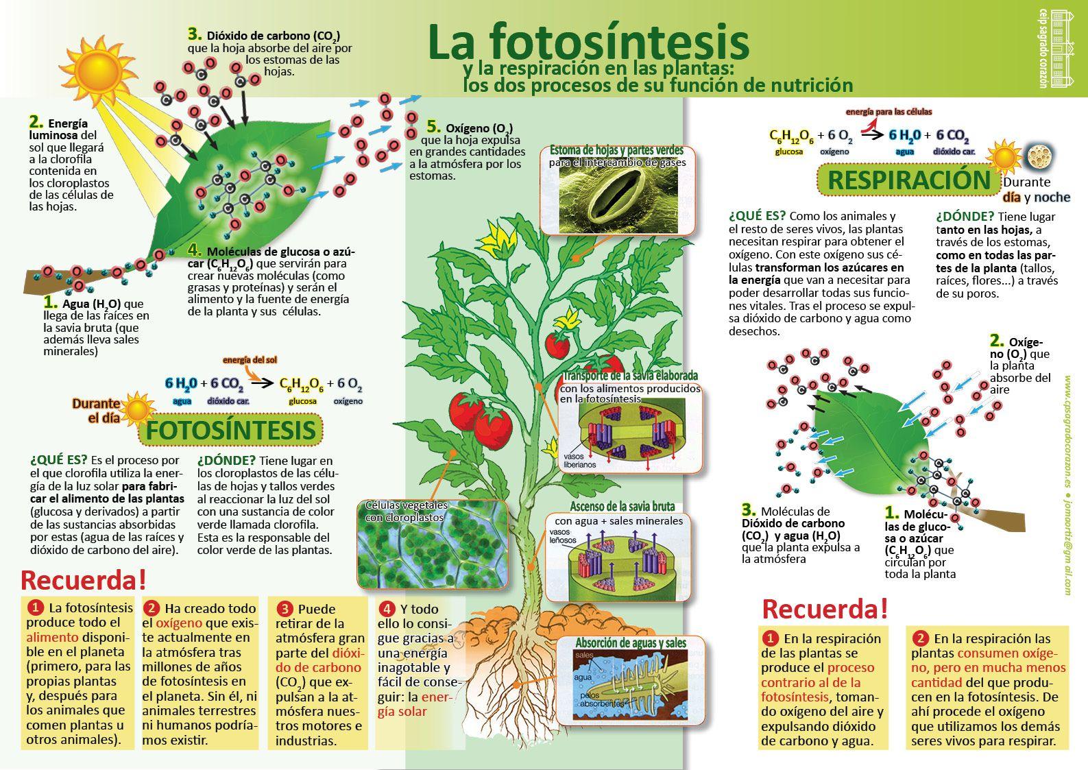 Infografías de Ciencias Naturales | biologia | Pinterest | Biología ...