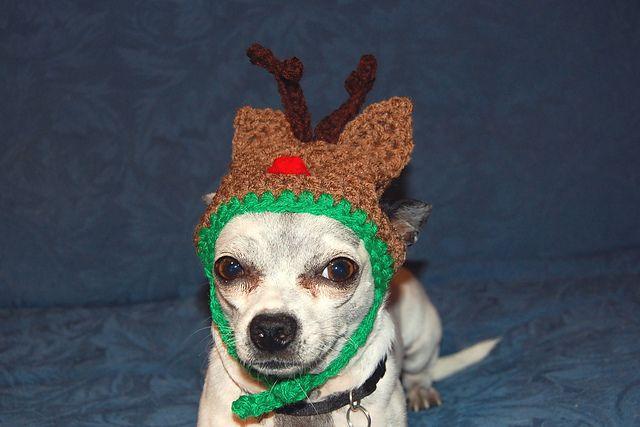 Reindeer Dog Hat Pattern By Sara Sach Reindeer Hat Dog Pattern