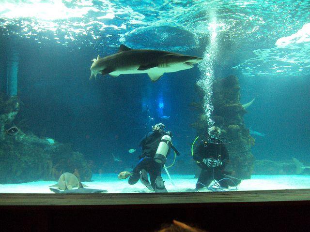 Top Ten Aquariums in the United States - plainadventure ...