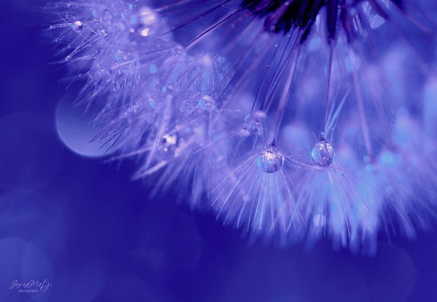 ~ Blue symphony ~ by Jasna Matz on 500px