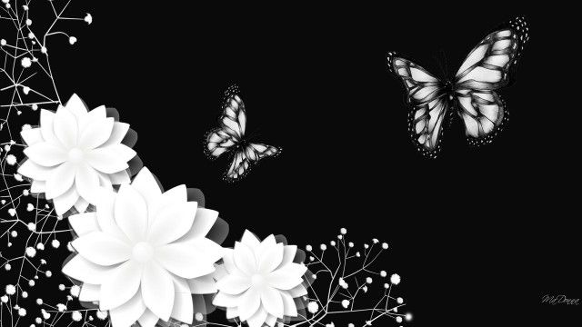 70 Hd Black And White Wallpapers For Free Download Resolution 1080p Black And White Wallpaper Butterfly Wallpaper White Wallpaper