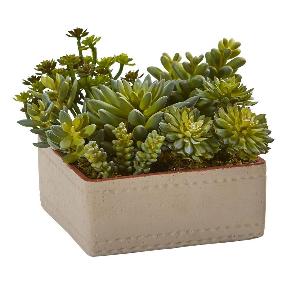 Nearly Natural 7 in Indoor Mixed Succulent Artificial Plant with Decorative Planter 4227  The Home Depotartificial