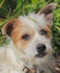 Adopt Mason On Cairn Terrier Mix Wire Fox Terrier Fox Terrier