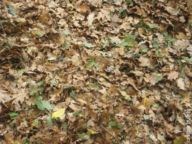 Bienvenido otoño! es mi estación favorita , asi que a disfrutar!Algunas fotos del paisaje que tengo cerca.......... #bienvenidootoño Bienvenido otoño! es mi estación favorita , asi que a disfrutar!Algunas fotos del paisaje que tengo cerca.......... #bienvenidootoño Bienvenido otoño! es mi estación favorita , asi que a disfrutar!Algunas fotos del paisaje que tengo cerca.......... #bienvenidootoño Bienvenido otoño! es mi estación favorita , asi que a disfrutar!Algunas fotos del paisaje #bienvenidootoño