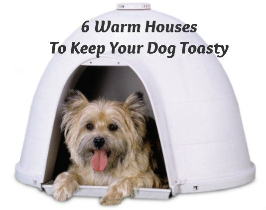 6 Warm Houses And Gadgets To Keep Your Dog Toasty This Winter