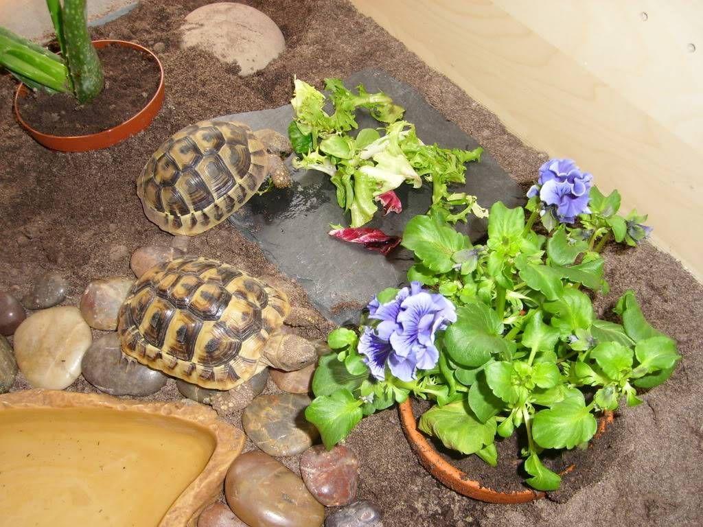 Tortoise Tables for Sale Happy Tortoise Habitats