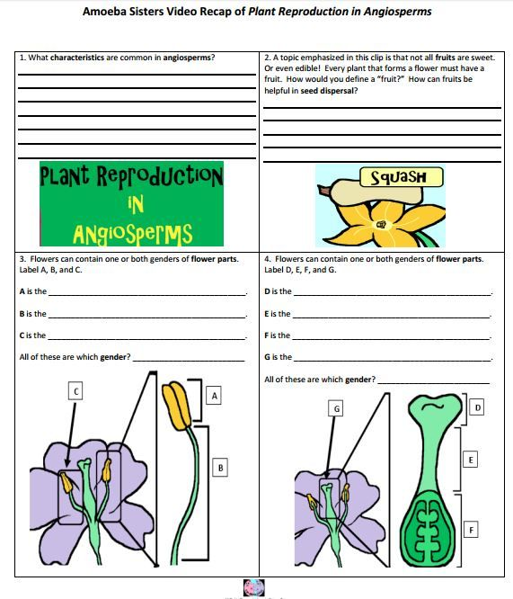 Angiosperm (flower) reproduction handout made by the ...