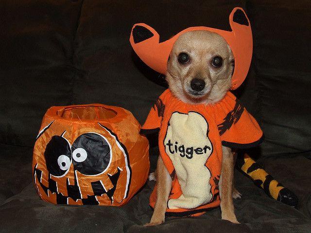 Tigger dog costume & Tigger dog costume   Holiday Ideas   Pinterest   Tigger Dog and Animal