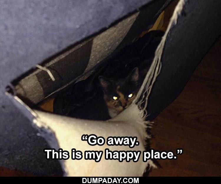 Top 50 Funny Animal Memes Of The Week In 2021 Cat Memes Animal Memes Clean Funny Animal Pictures