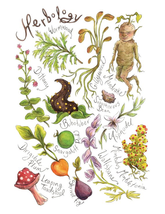 This Herbology Print Is A Collection Of Watercolour Illustrations
