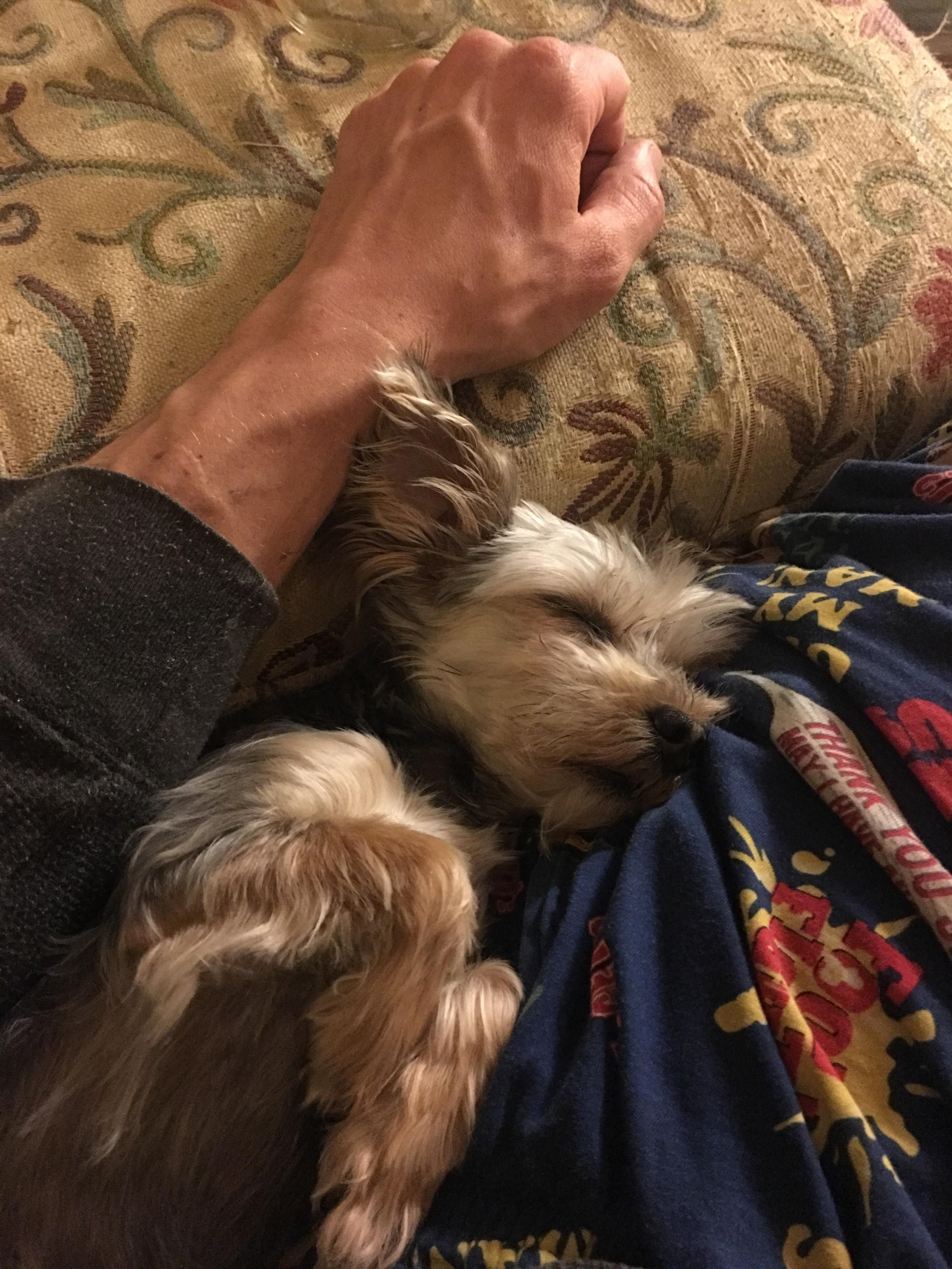 May you rest as easy as my doggo. http://ift.tt/2r43dBs