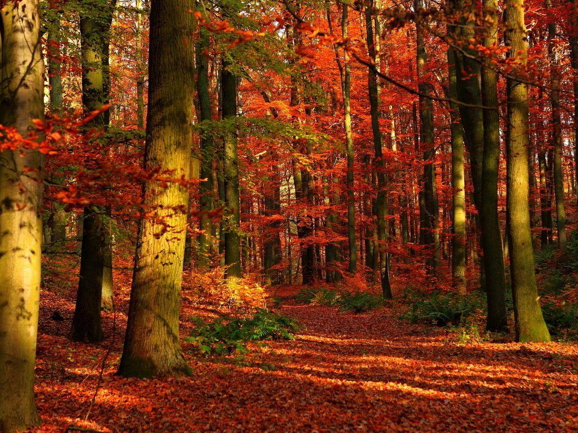 paisajes rojizos de otoño - Buscar con Google