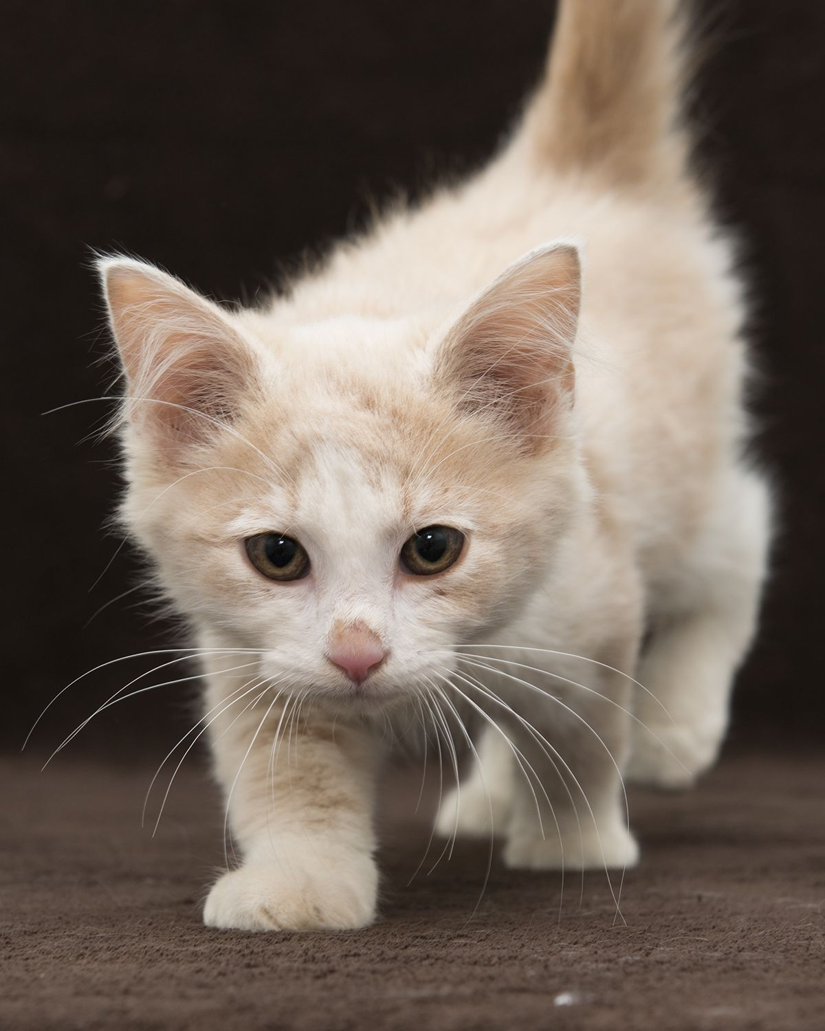 Muffie May Sound Like A Snooty Name But This Gal Is Anything But That Let S Find Her A Foreverhome 100kchallenge Cat Adoption Animals Puppy Adoption