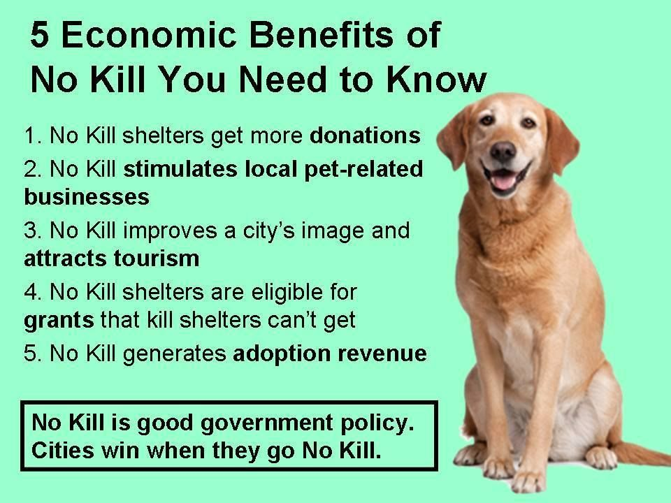 5 Economic Benefits Of No Kill You Need To Know Homeless Pets Dead Dog Stimulation