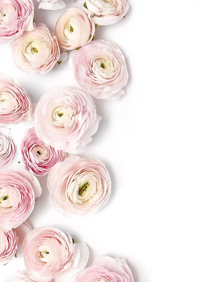 pink ranunculus pink pinterest blumen rosen und blumen bl ten. Black Bedroom Furniture Sets. Home Design Ideas