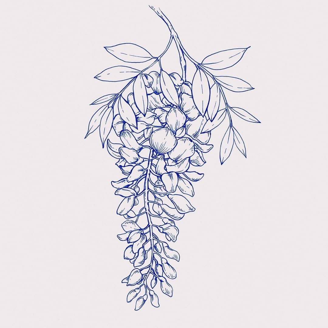 Wisteria Floral Drawing Ink Art Wisteria