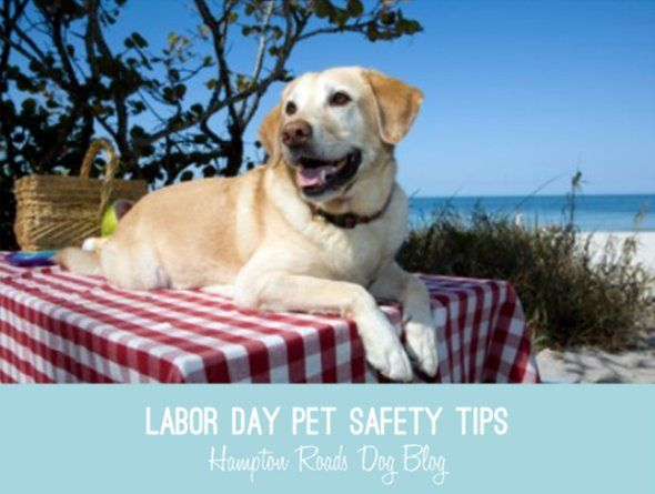Labor Day Pet Safety Tips Pet Safety Pets Dog Friendly Beach