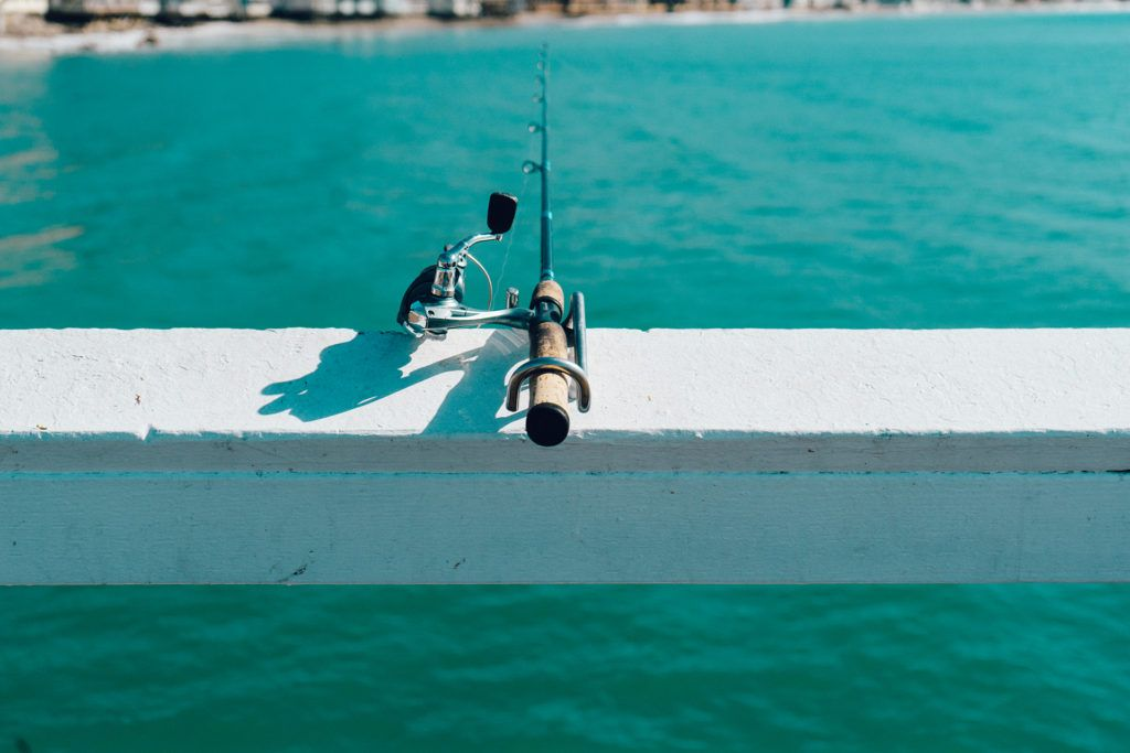 A guide to fishing booking charters siesta key rentals