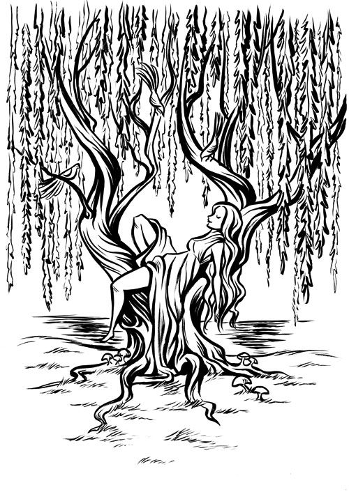 Pin By Mojra On Willow Tree Coloring Page Willow Tree