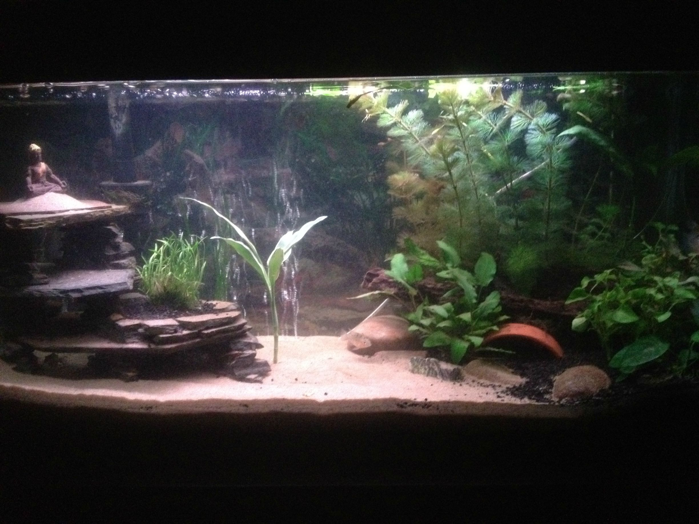 Diy Slate Cave - Aquarium Advice Forum