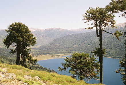 Araucaria Wikipedia In 2021 Scenery Natural Landmarks Country Roads