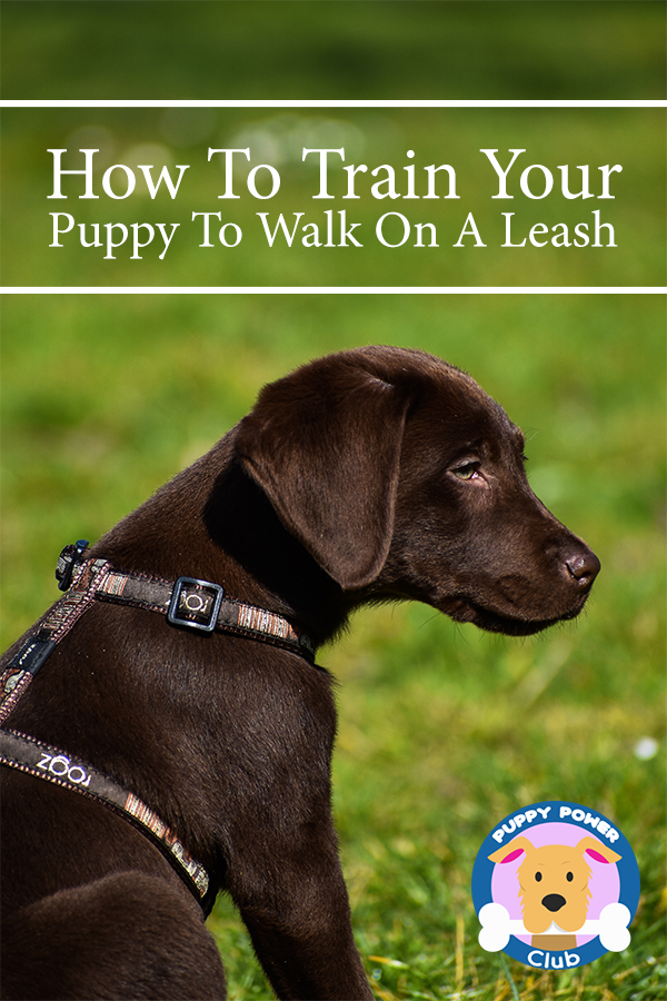 How To Train Your Puppy To Walk On A Leash Puppy Power Club Training Your Puppy Puppy Leash Puppy Training
