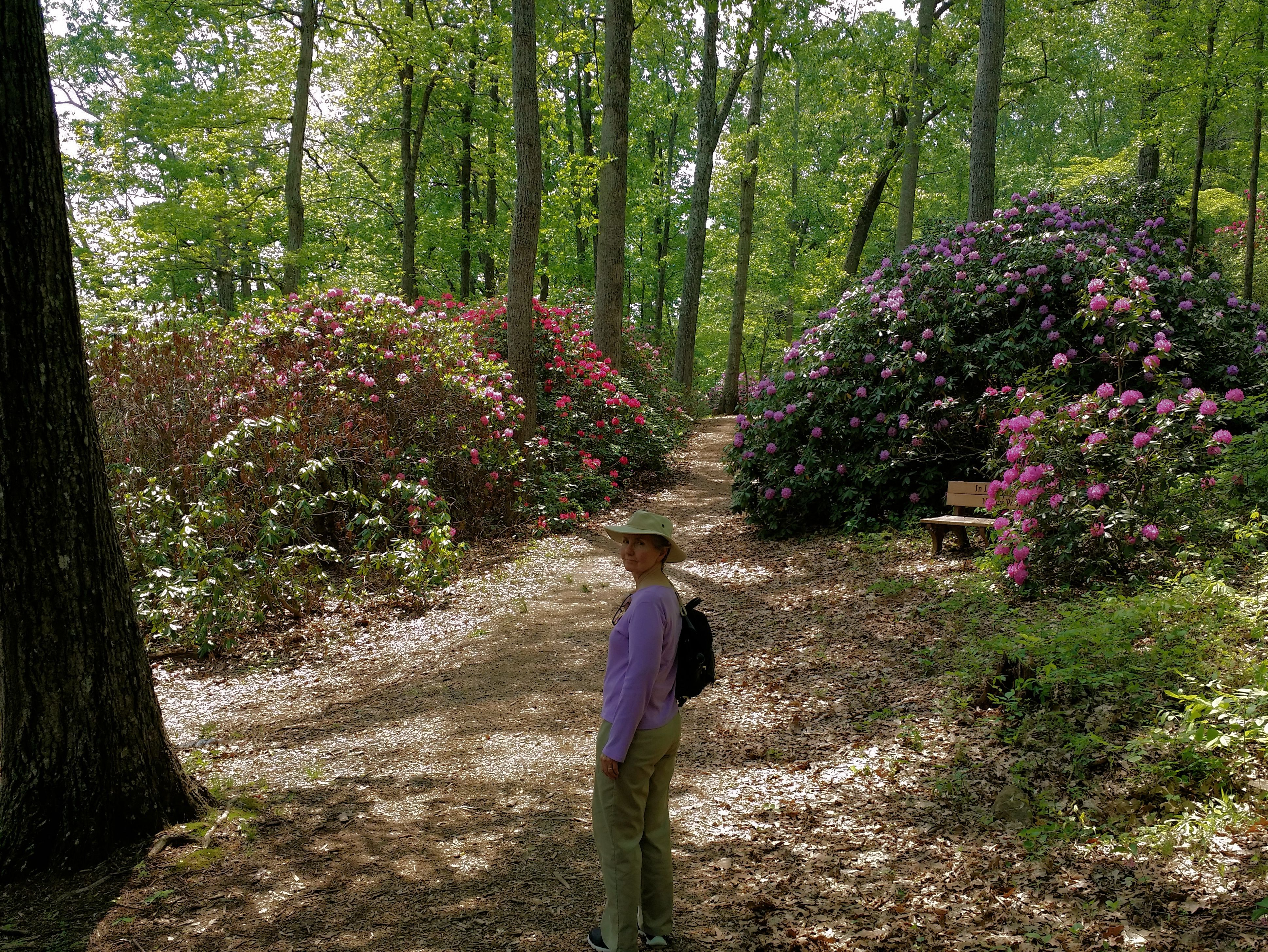 Rhododendrons at Hamilton gardens in Hiawassee, Towns