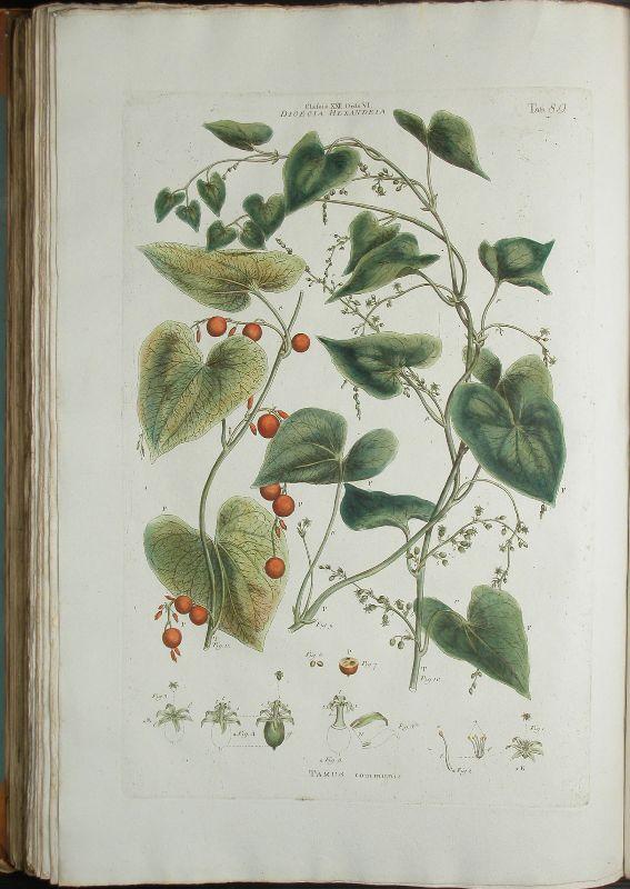 Illustratio systematis sexualis Linnaei, Tafel 89