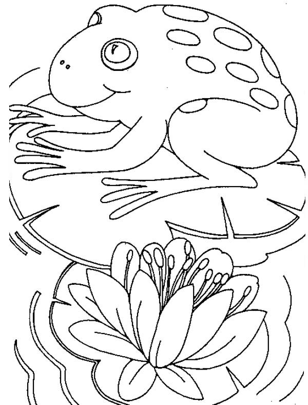 Big Frog Sitting Comfortably On Lily Pad Coloring Page Color Luna In 2020 Lily Pads Coloring Pages Cool Coloring Pages