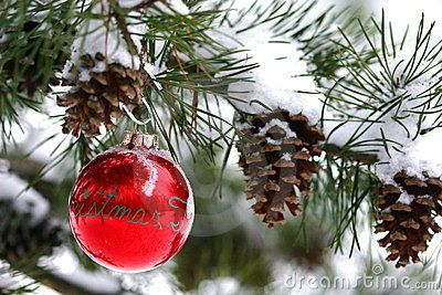Red Christmas decoration on snow-covered pine tree outdoors by ...