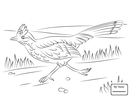 Roadrunner Bird Coloring Pages Bird Coloring Pages Coloring Pages Animal Coloring Pages