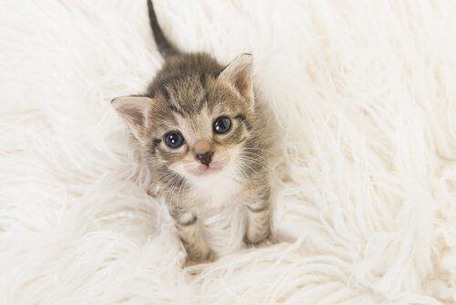 5 beneficios de dormir con tu gato